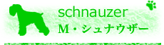 M・シュナウザー